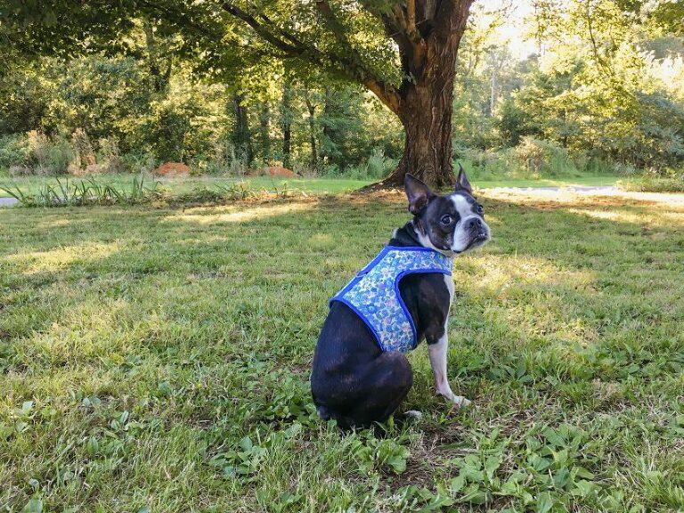 Free DIY dog harness tutorial